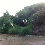 jardins del CAS Sarria