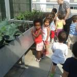 Mirem les plantes